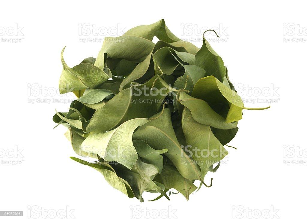 Leafball royalty-free stock photo