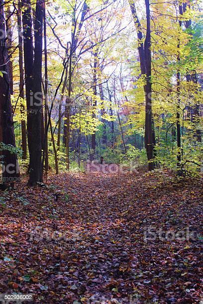 Photo of Leaf-covered autumn path