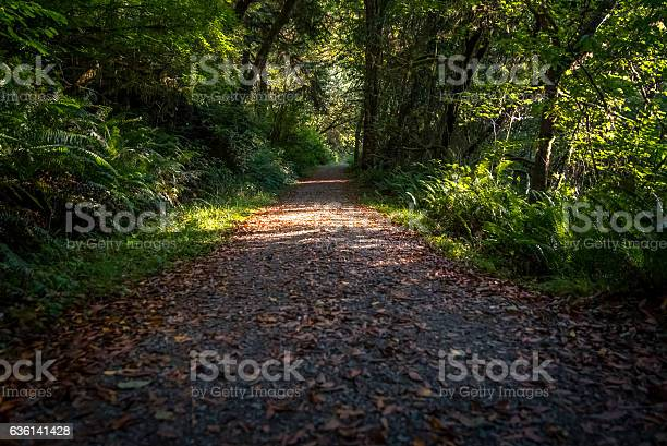 Photo of Leaf-covered forest path.