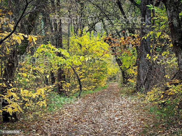 Photo of Leaf-Covered Path Through Autumn Woods