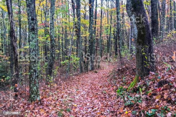Photo of Leaf-Covered Trail in Tennessee Mountain Forest