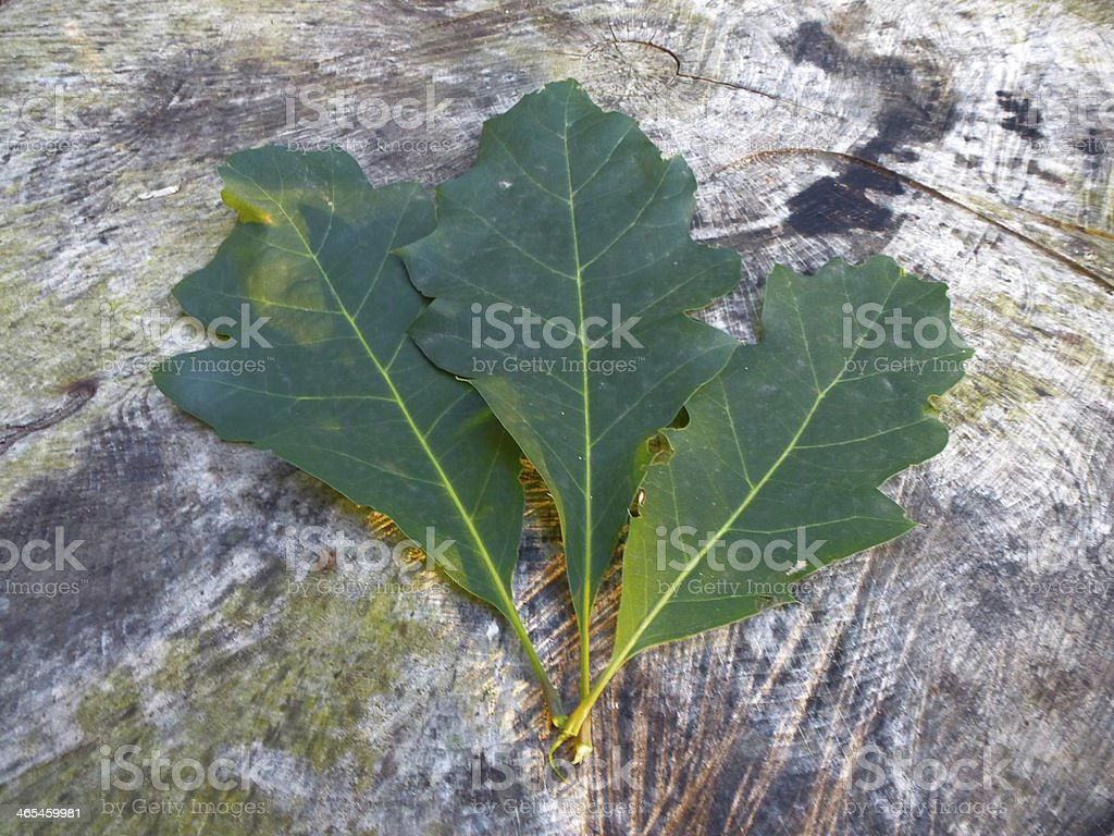Leafes royalty-free stock photo