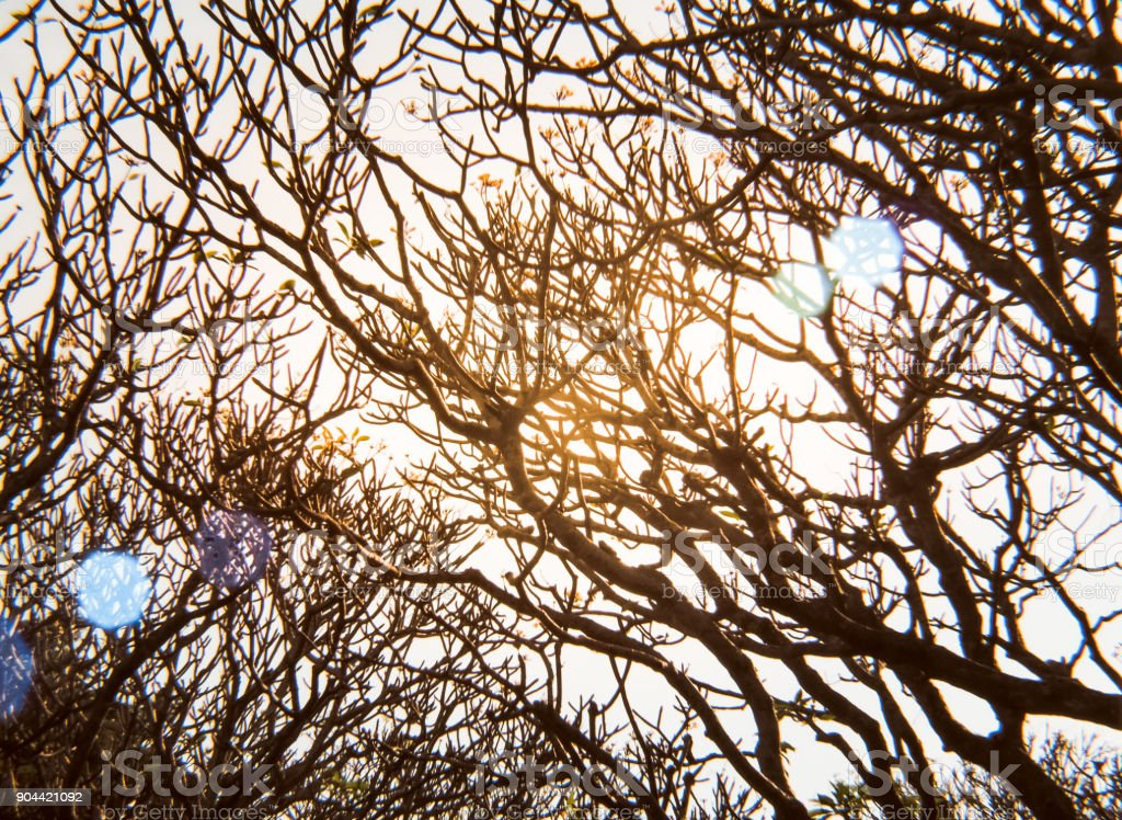 Leafless branches of tree against sky stock photo