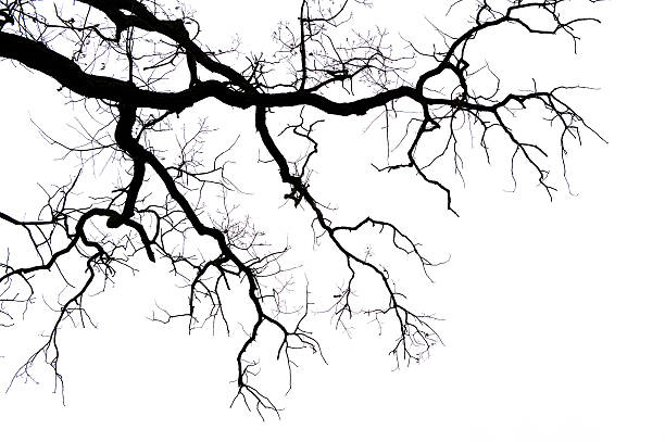 leafless branches on white - branch plant part stock pictures, royalty-free photos & images