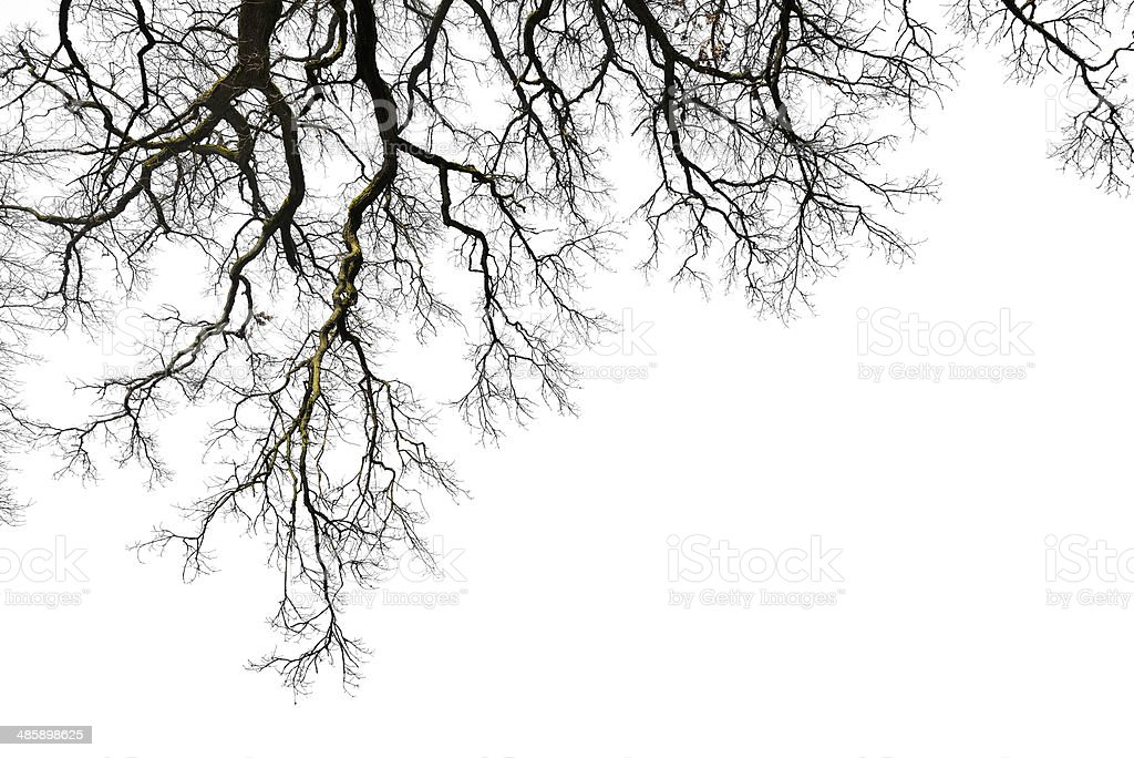 Leafless branches stock photo