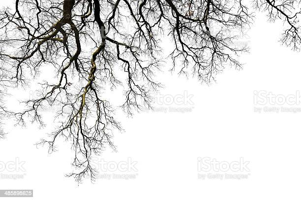 Photo of Leafless branches