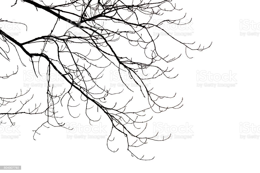 Leafless ramas - foto de stock
