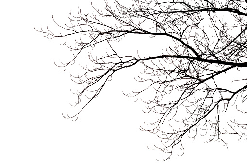 Leafless branches