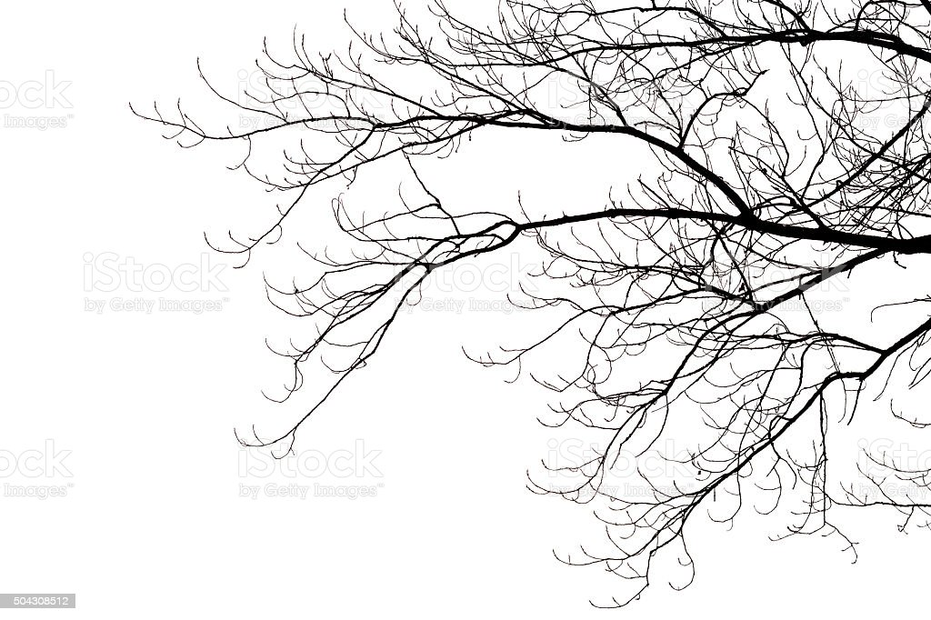 Leafless branches - Photo