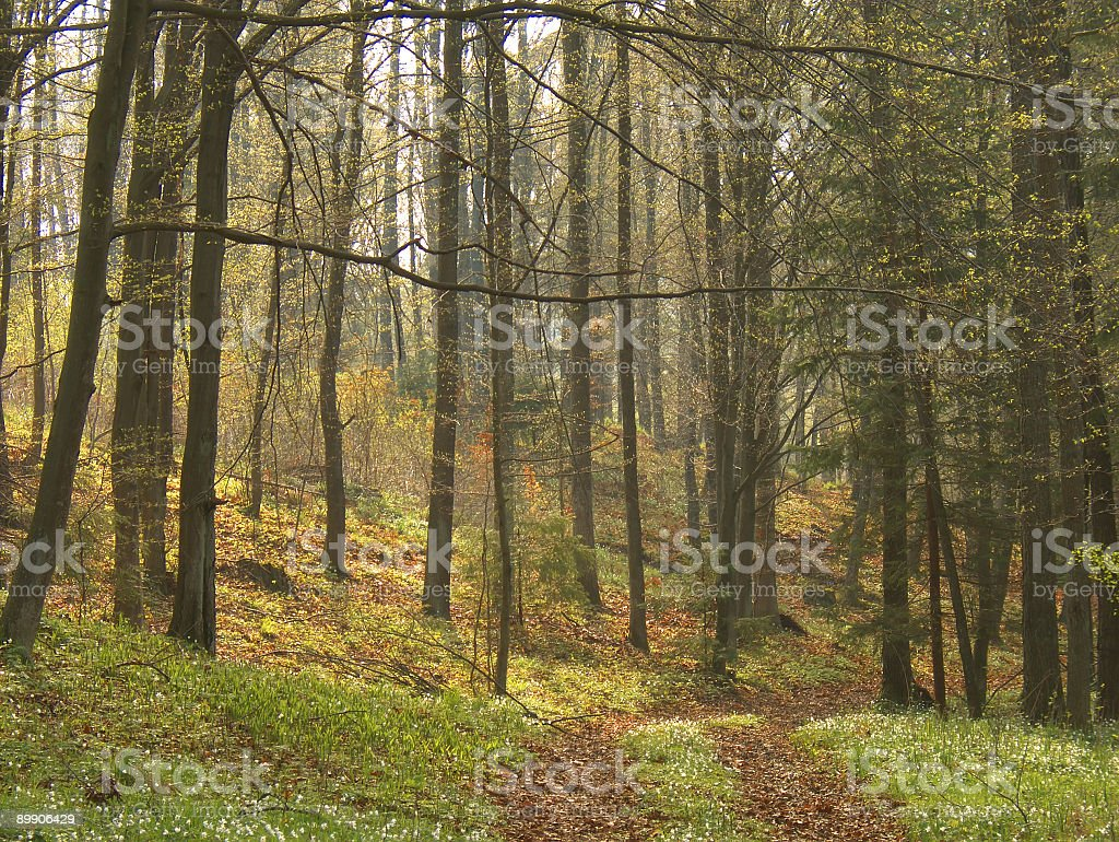 leafless forest royalty-free stock photo