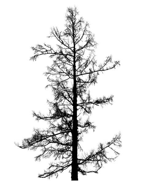 royalty free bare tree template silhouette pictures images and