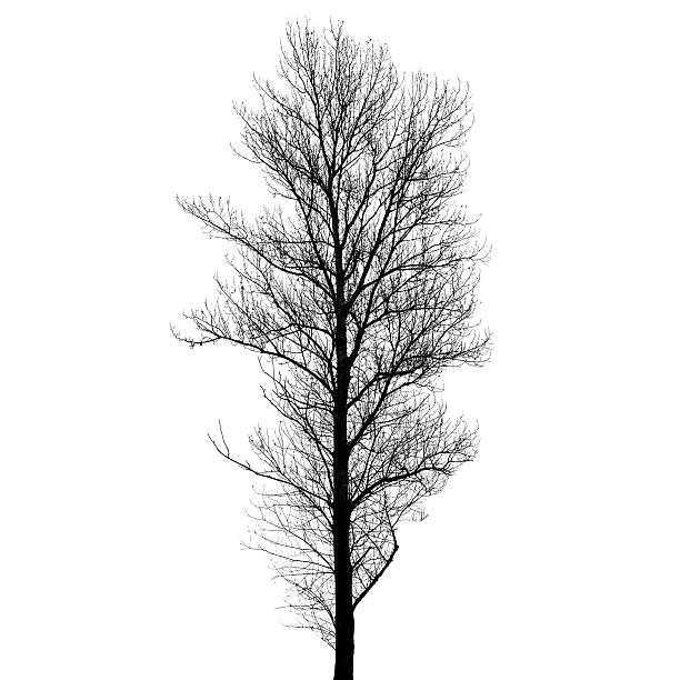 royalty free bare tree template silhouettes pictures images and