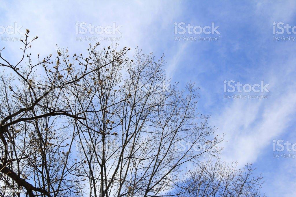 Avlövade träd mot blå himmel på vintern - Royaltyfri Blå Bildbanksbilder