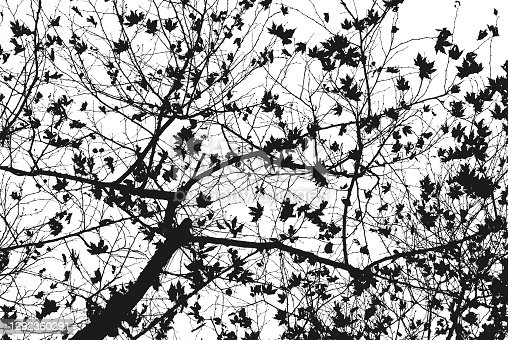 Leafless tree branches in black and white. Dramatic forest background.