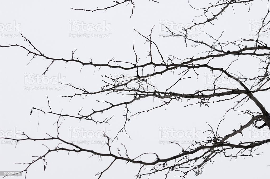 Leafless Tree Branches/Twigs stock photo