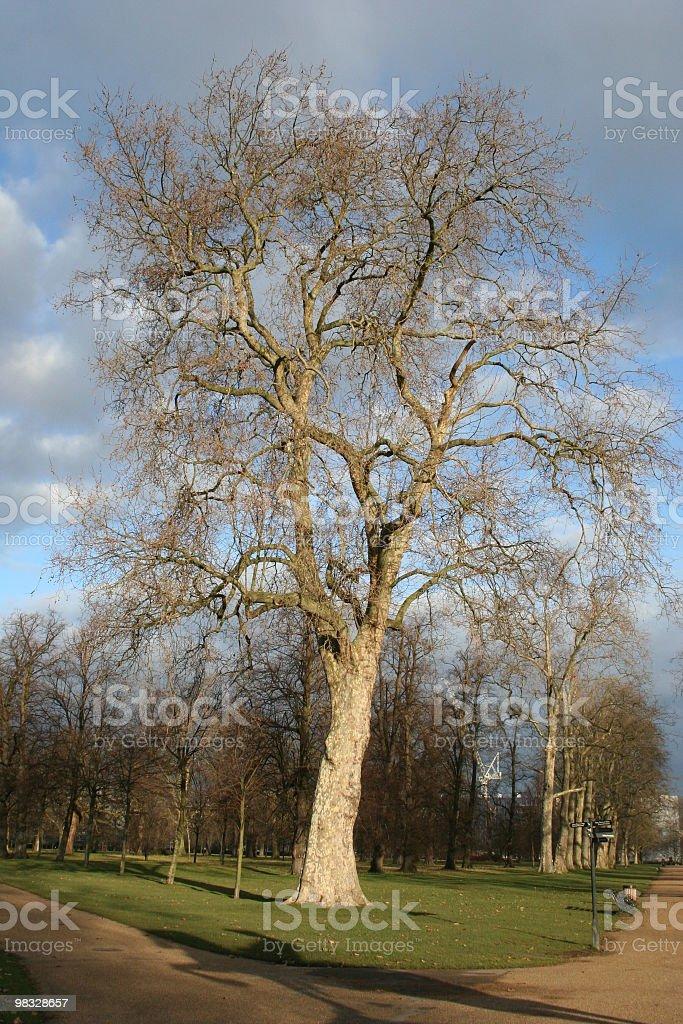 Leafless albero Parco di Kensington, Londra, Regno Unito foto stock royalty-free