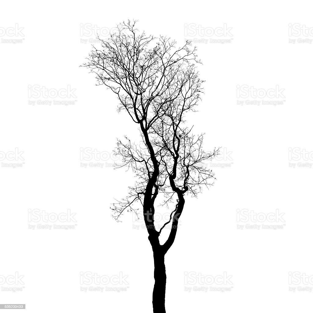 Leafless tree silhouette isolated on white background stock photo