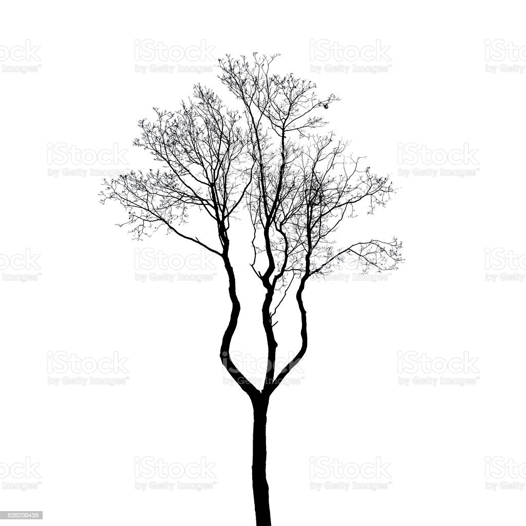 leafless tree silhouette isolated on white stock photo more BMW 5 Series M Sport Package leafless tree silhouette isolated on white royalty free stock photo