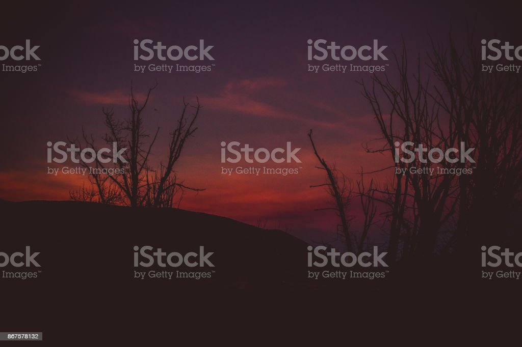 Leafless Tree Silhouette stock photo