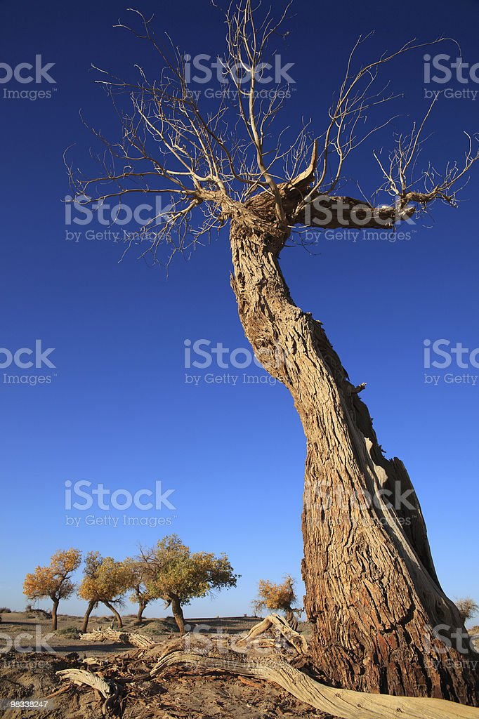leafless tree trunk royalty-free stock photo