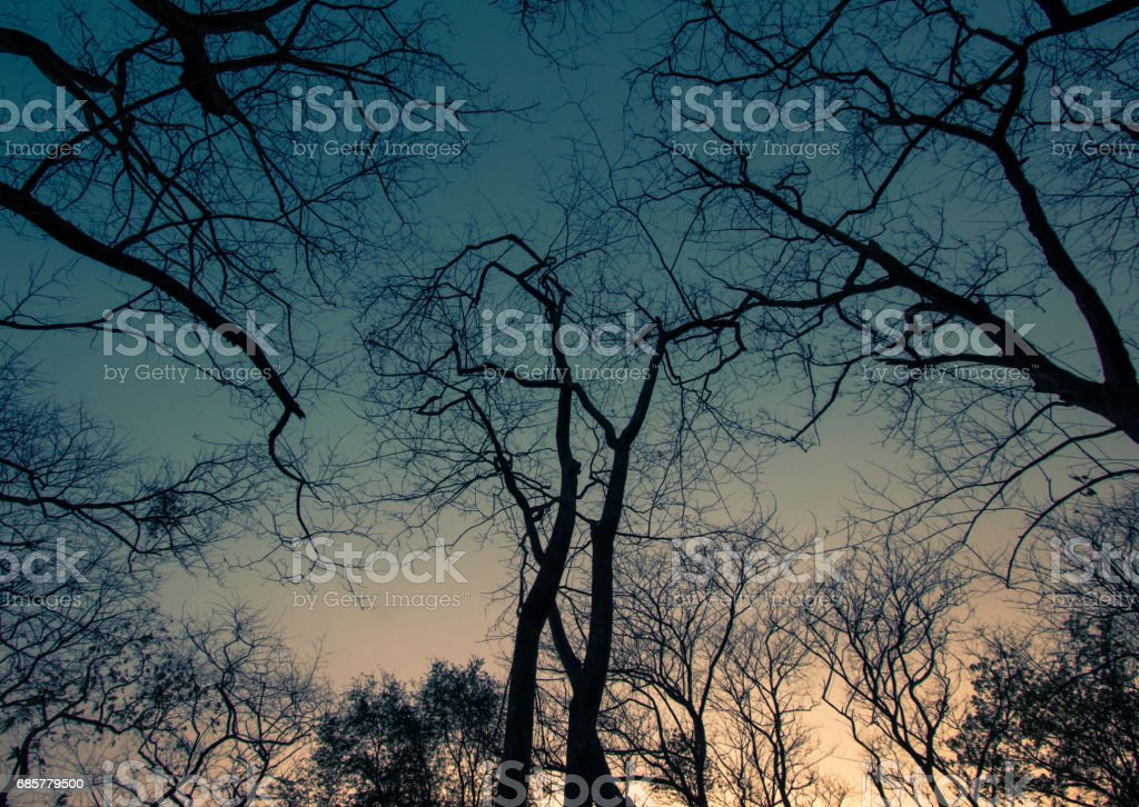 Leafless trees and evening sky royalty-free stock photo