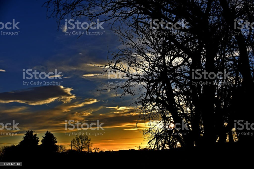 Leafless trees and vivid sunset stock photo