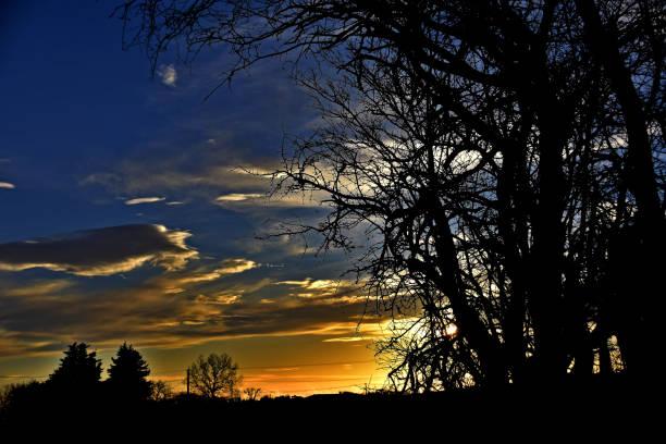 Leafless trees and vivid sunset stock photo