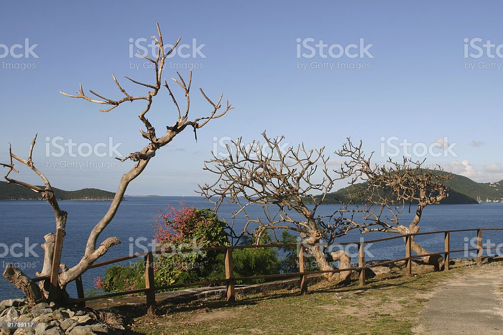 Leafless Trees Caribbean royalty-free stock photo
