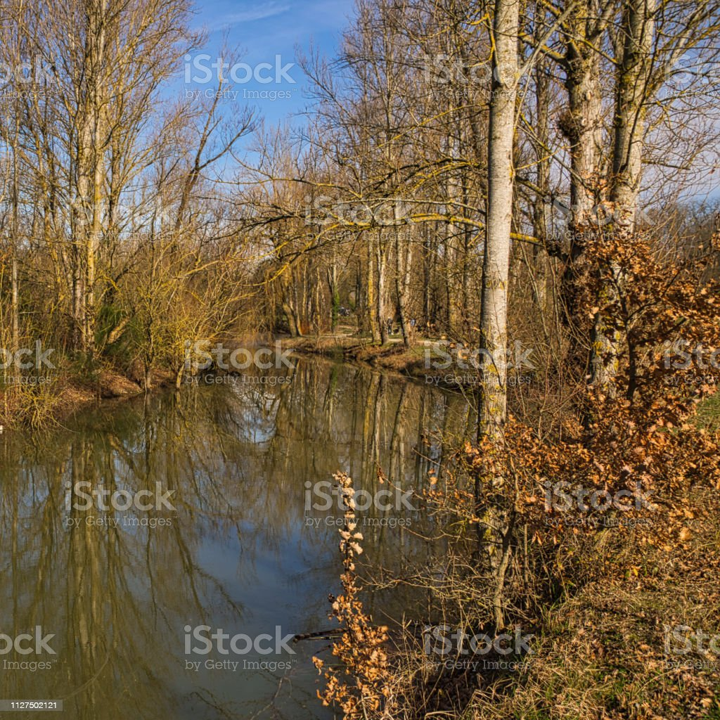 Leafless trees in mid-winter stock photo