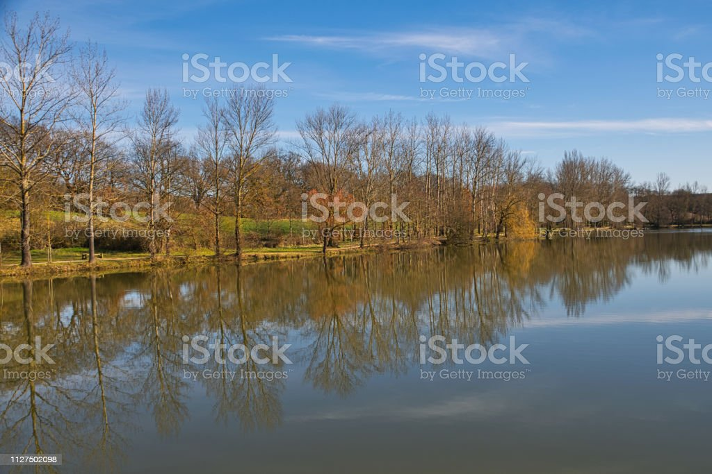 Leafless trees reflecting in a lake stock photo