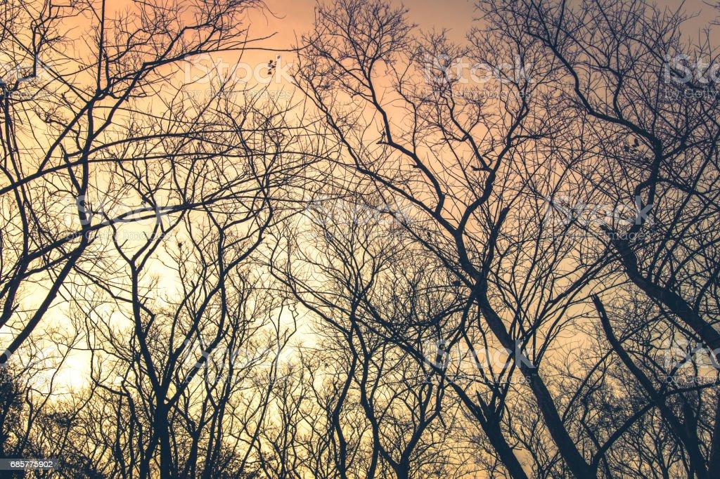 Leafless trees with orange sky background royalty-free stock photo