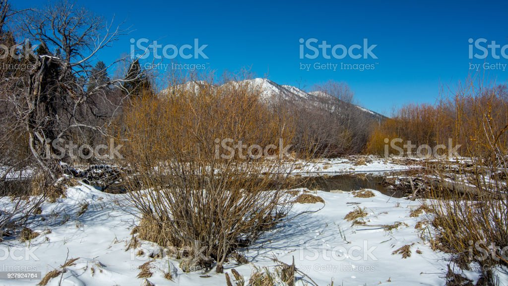 Leafless willow bushes overwintering in Tahoe stock photo