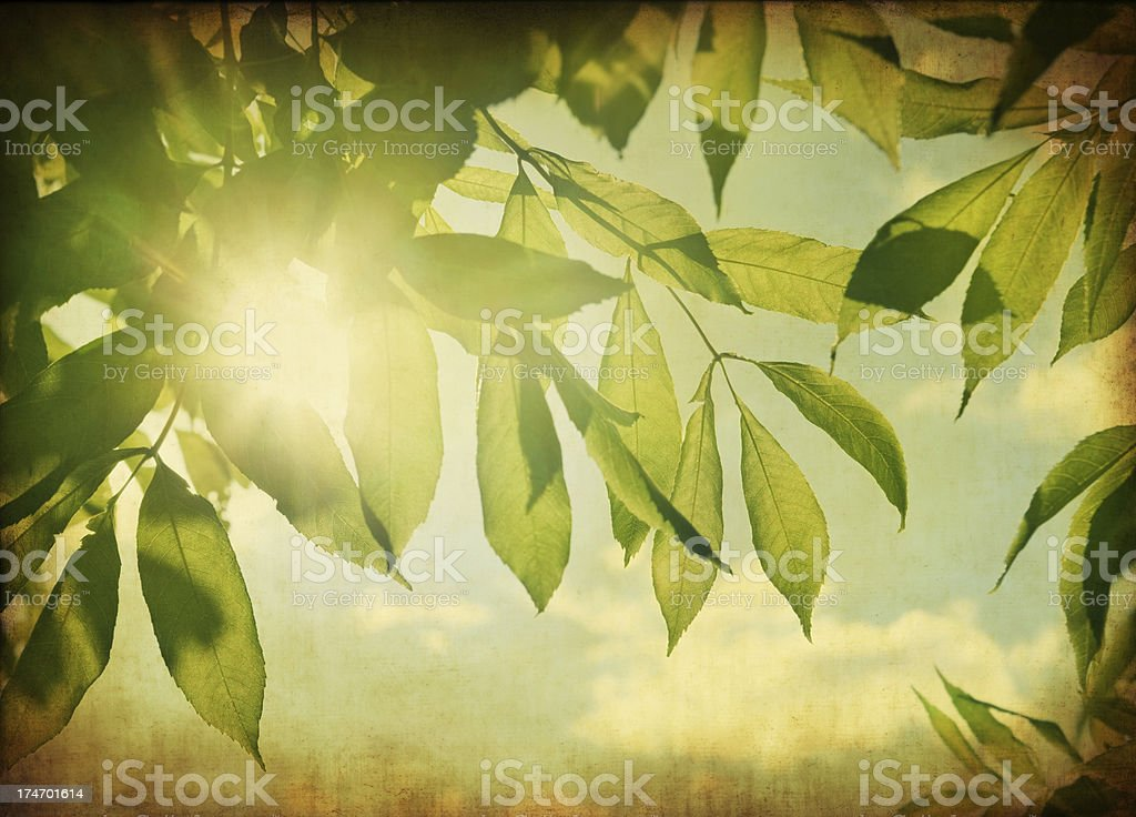 Leafs against the sun royalty-free stock photo