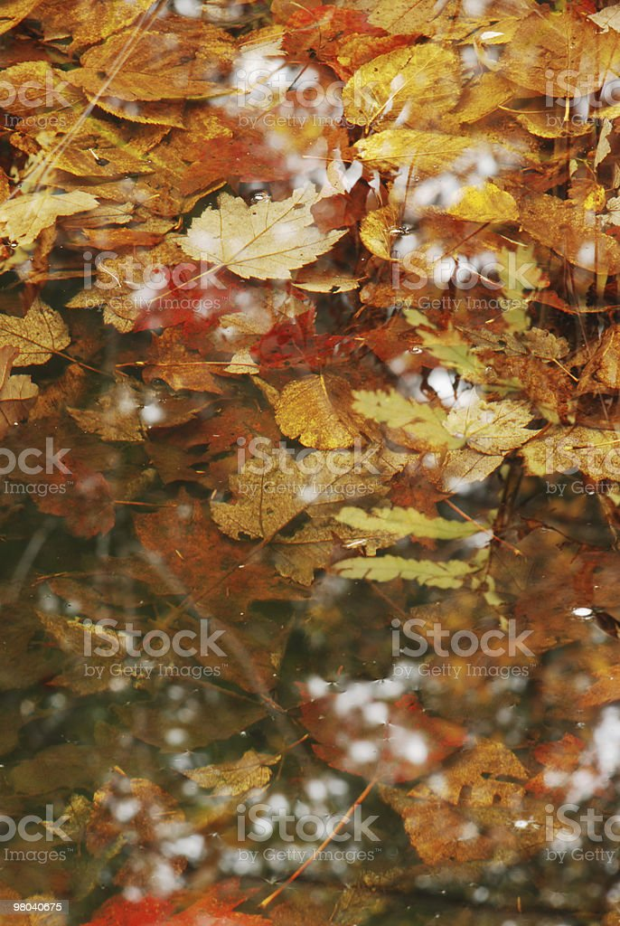 Leafs and reflection royalty-free stock photo