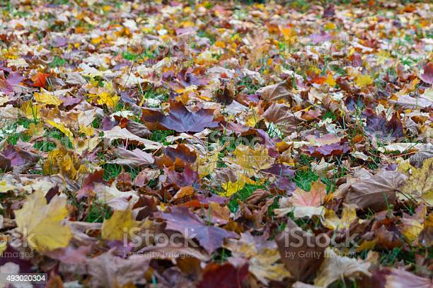 Photo of Leafs in autumn