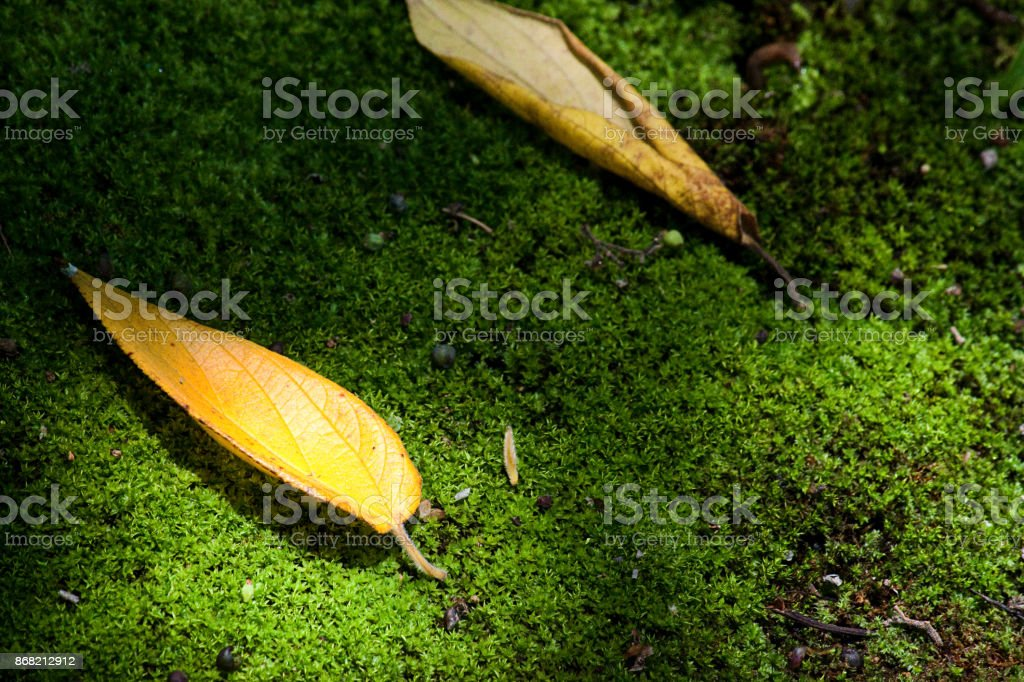 Leafs in Moss stock photo