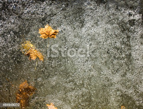 istock Leafs in water 494949070