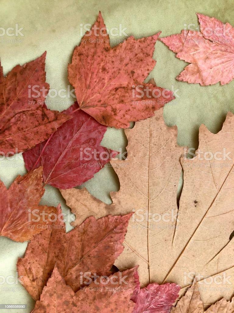 Yeşil yapraklar stok fotoğrafı