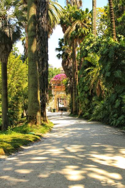Leafy and green gardens in the Botanical Garden of Lisbon – zdjęcie