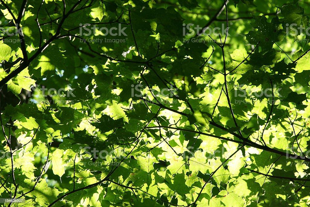 Leafy Frame stock photo