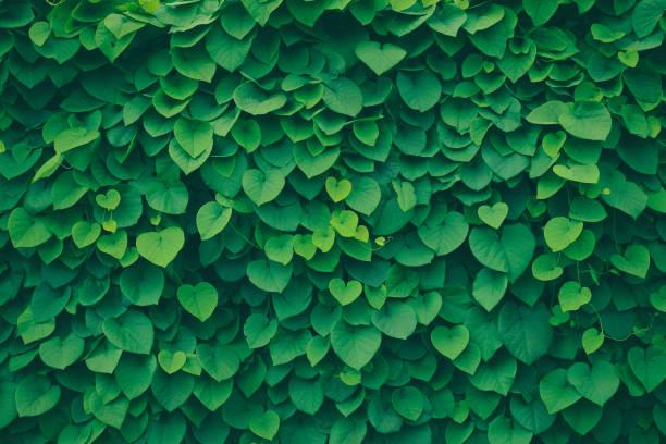 Leafy green background picture id1050730168?b=1&k=6&m=1050730168&s=612x612&w=0&h=mmffxlwrl ja3uahn57iyod rppq oeyiwy lw2gnl4=