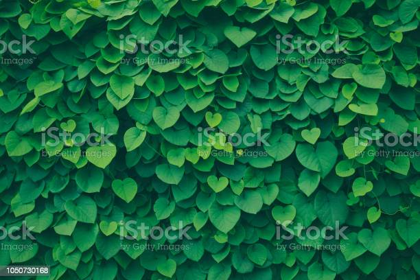 Photo of Leafy green background