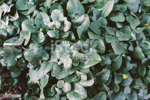 Leaf, Heart Shape, Plant, Green Background