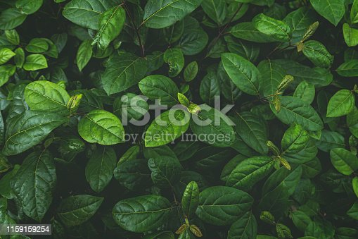 Plant, Soft ,Leaf, Nature, Abstract, Turkey - Middle East, Backgrounds