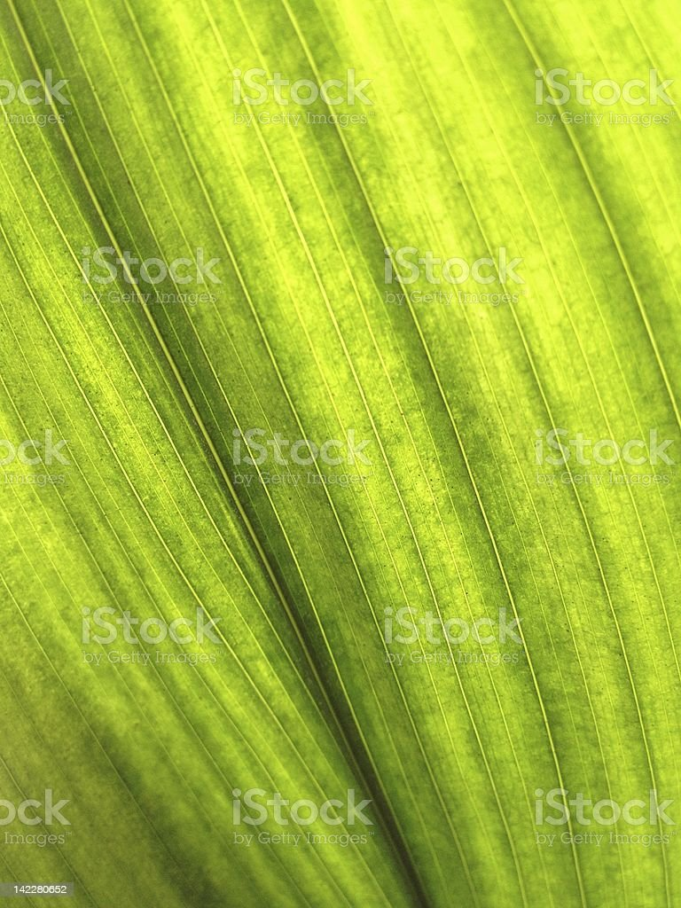 Leafy Green Plant Leaf Background royalty-free stock photo