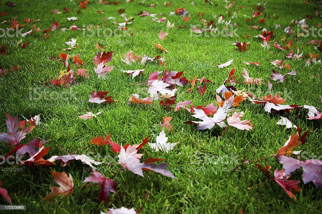 Leafy Lawn stock photo
