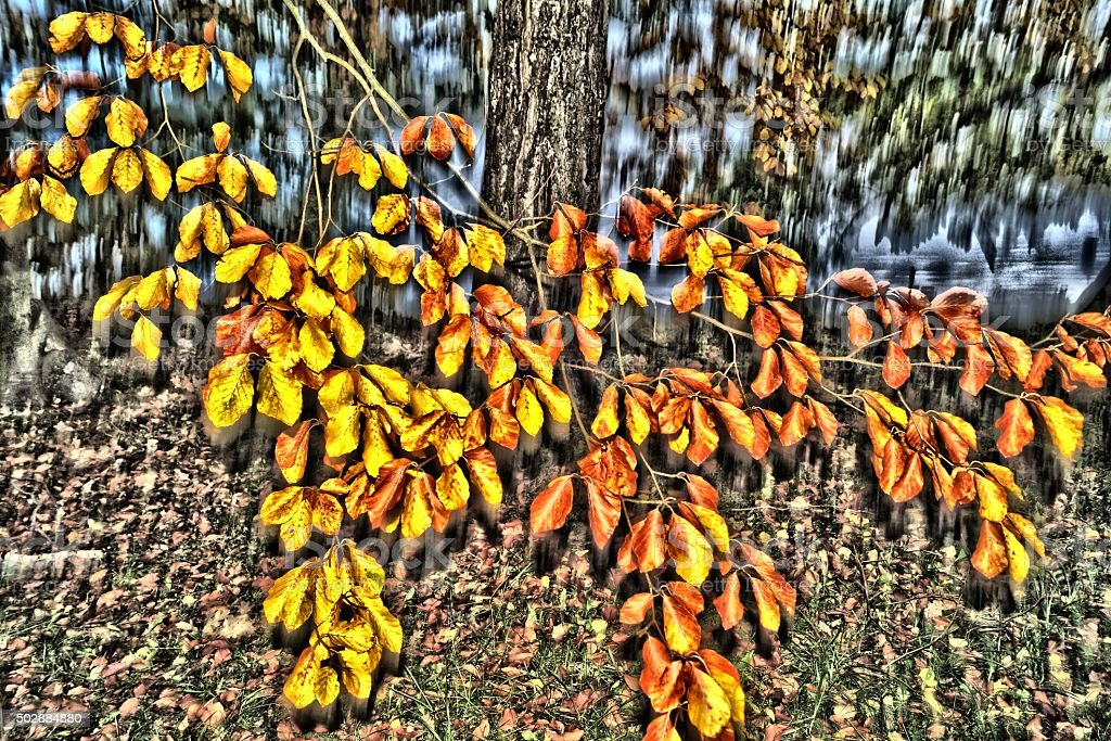 leafy stock photo