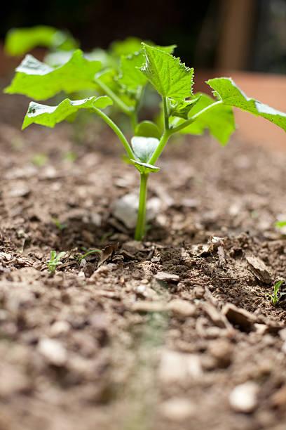 Leafy Vegetable stock photo