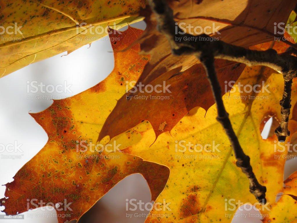 Leafy Veins stock photo