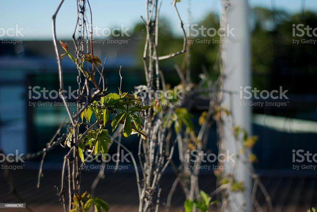 Leafy Vine stock photo